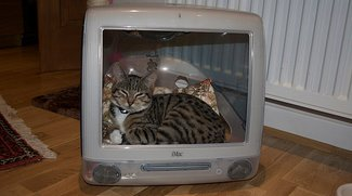 Pics of the Day: Cats Love Macs