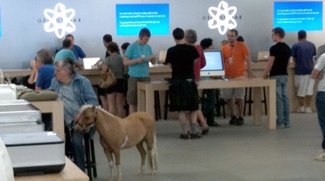 Pic of the Day: Ein Pony im Apple Store