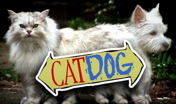 Acht Anzeichen, dass deine Katze eigentlich ein Hund ist