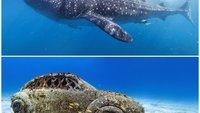 Phantastische Unterwasseraufnahmen: Google Street View taucht ab!