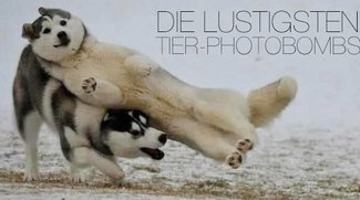 Die 20 lustigsten Tier-Photobombs