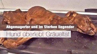 Abgemagerter und im Sterben liegender Hund überlebt Gräueltat