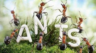 Makrofotografie - Andrey Pavlov und seine Ameisen