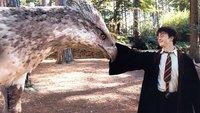 Harry Potter 8: Alle Infos zur Fortsetzung der Filmreihe