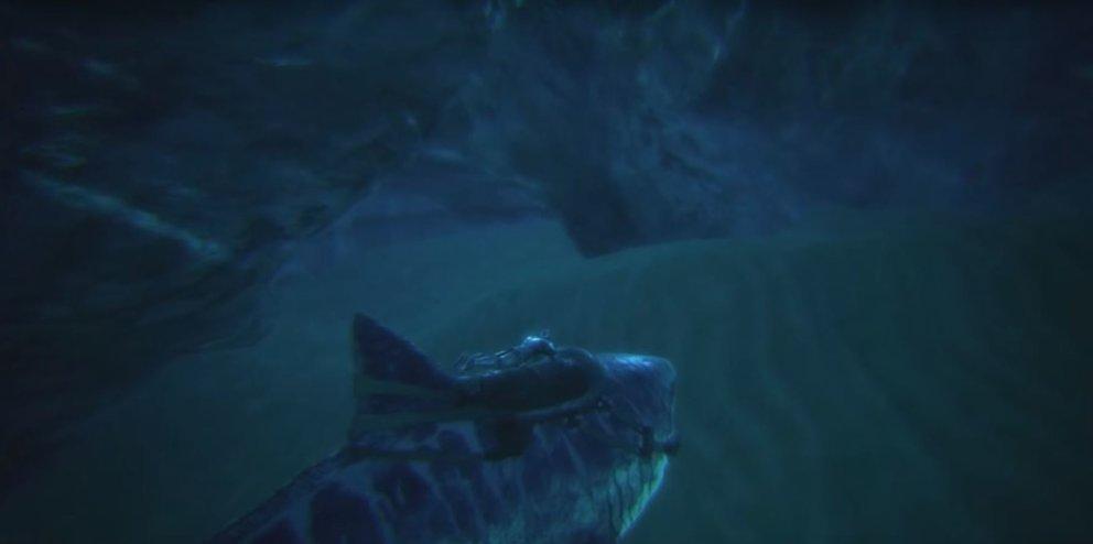 Der Eingang einer Unterwasserhöhle zeichnet sich meist durch Luftblasen ab