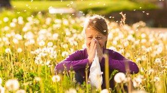 Pollenflug-Apps: Dem Heuschnupfen einen Schritt voraus