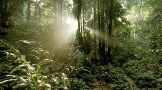 Pick Up-Dschungelprüfung: App-Download und Anleitung