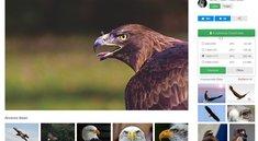 Copyright-freie Bilder - die drei besten Seiten für lizenzfreie Fotos