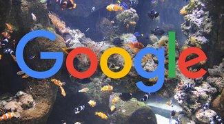 Muskie, Walleye und Taimen: Google arbeitet an drei Pixel-Nachfolgern