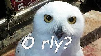 "Was heißt ""o rly?"" Bedeutung des Memes"