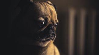 """""""Anti-Hund-Symbol"""" im Galaxy S8 (Plus): Was steckt dahinter?"""