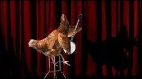 Musikalische Tiere - Diese Tiere lassen etwas von sich hören