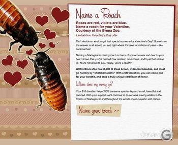 Ich wollte schon immer einer Kakerlake einen Namen geben