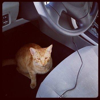Neuer Mitfahrer? #GIGAinLA #LosAngeles #SanFrancisco #Cat http://t.co/5xSDwJ2ae1
