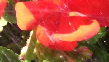 Detailansicht des Fotos der Xperia Z1-Kamera