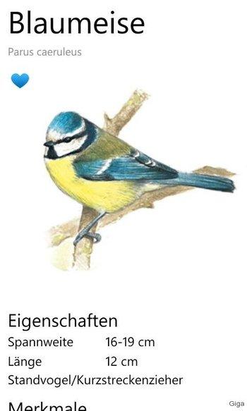 blaumeise-nabu-app