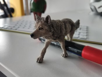 Makro, manueller Fokus aufs Gesicht des Wolfes: Etwas zu dunkel, annehmbarer Bokeh.