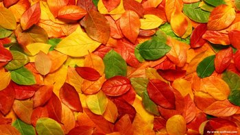 3d-colorful-leaves-windows-8-wallpaper1366x76861100