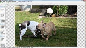 CodedColor FotoStudio Pro