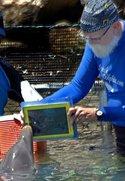 Das iPad als Kommunikationshilfe zwischen Delfin und Mensch