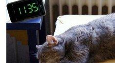 iPhone-Wecker-Bug: Wenn das iPhone eine Stunde zu spät klingelt