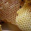Google Android: Honeycomb bleibt vorerst unter Verschluss