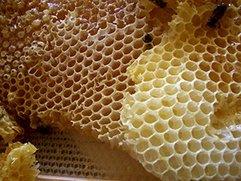 Android Honeycomb: Steifer Gegenwind fürs iPad