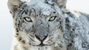 Apple-Updates: Snow Leopard, Remote Desktop und Server Admin Tools