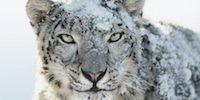 Apple-Updates: Snow Leopard, Remote Desktop und Server Admin Tools