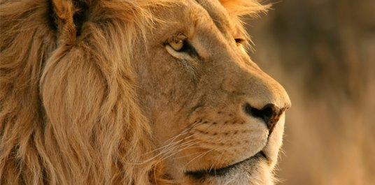 Lion und Snow Leopard: Neue Druckertreiber erhältlich