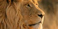 Lion-Lüfterprobleme lösen
