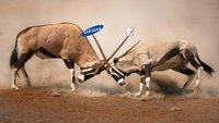 Apple vs. Samsung: Verkaufsverbot für Samsung Galaxy Tab in den USA