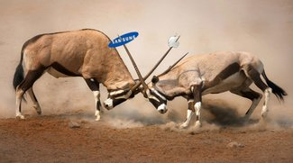 Samsung kann von Apple Schadensersatz verlangen