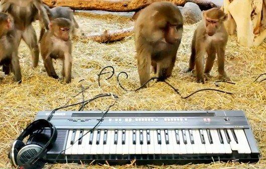 Affen am Synthesizer - im Video