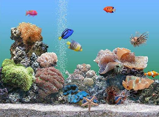 Im SereneScreen Aquarium ist die Welt in Ordnung und das Wasser muss nicht ständig getestet werden!