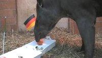 EM-Orakel: Die 10 wichtigsten Tipp-Tiere im Überblick - und ihre Deutschland-Prognosen 2012