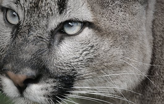 Mac OS X 10.8 Mountain Lion: Tests, Tipps und Meinungen