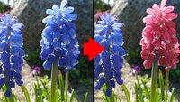 GIMP: Farbe ersetzen & ändern – so geht's