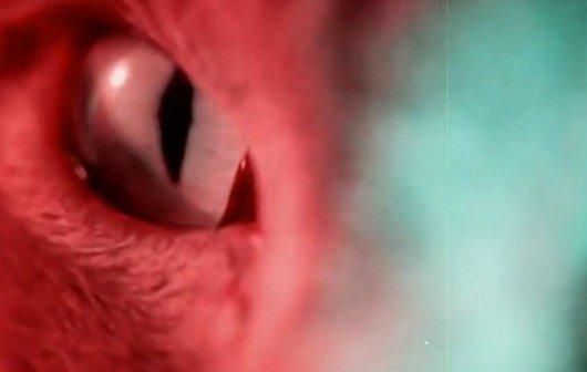 Zombies und halluzinierende Katzen: Alle Kurzfilme des Sundance-Festivals ansehen