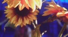 Bethesda: Brennende Sonnenblumen im neuen Teaser