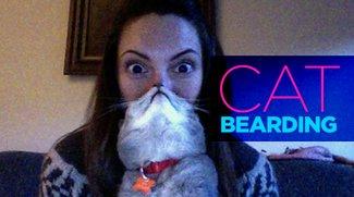 Cat Bearding: Gesichtsbehaarung der felinen Art