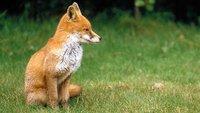 Firefox Update: So aktualisiert Ihr den Mozilla-Browser