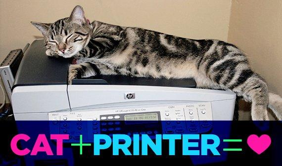 Kleine Papiertiger: Warum Katzen so gerne das Internet ausdrucken