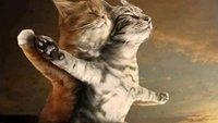 Die besten Katzen-Spiele zum Weltkatzentag