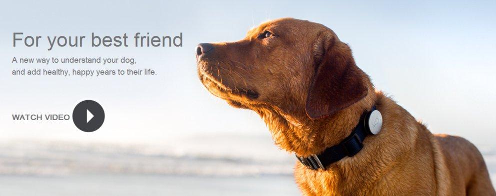 Bewegungssensor für Hunde: Volle Kontrolle über das Haustier?