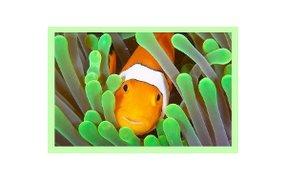 Clownfish für Skype