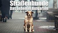 Das kalte Leben der bulgarischen Straßenhunde