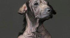 Hundeportraits – schaurige Sekunden vor dem Einschläfern