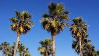 Zurück aus Los Angeles – Meine Nachrede zur Stadt der Engel