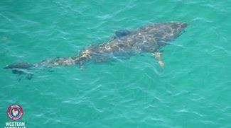 Bitte nicht folgen: 300 australische Haie sind jetzt bei Twitter